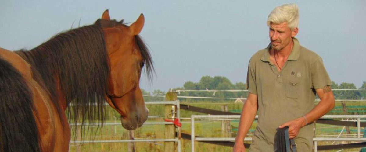Paard in therapie